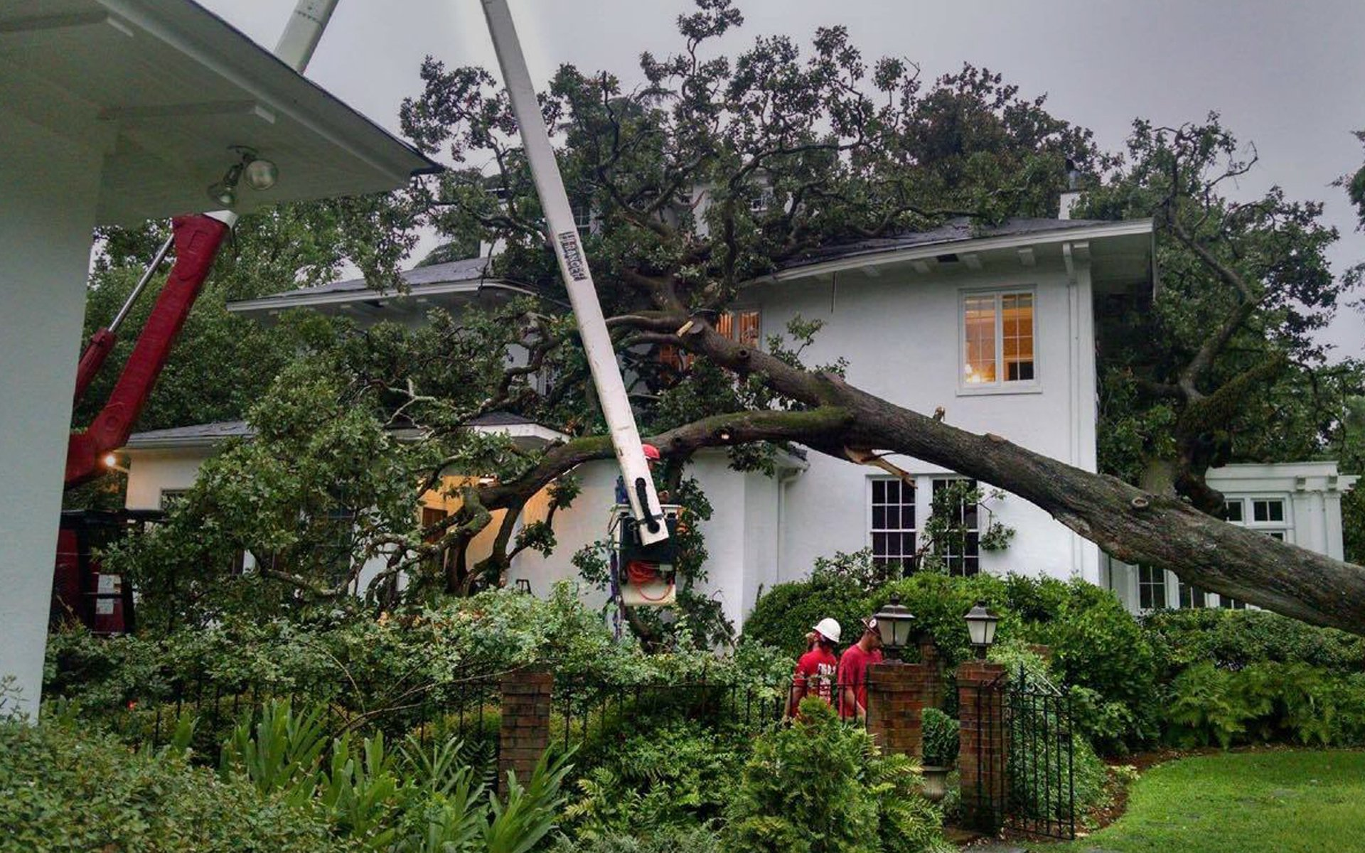 tree services Grovetown, GA