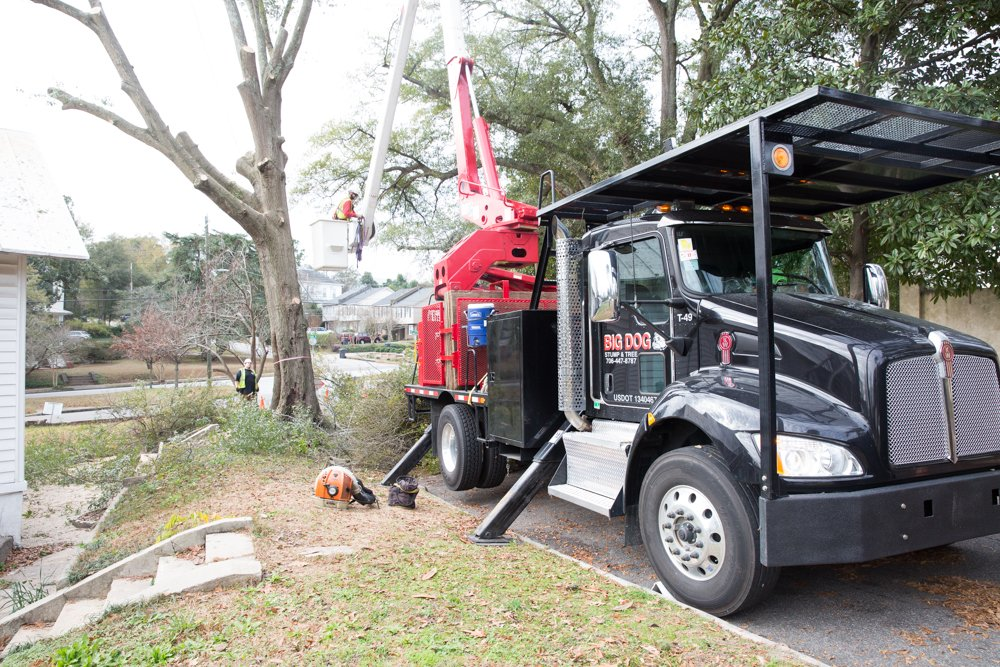 tree removal Grovetown, GA